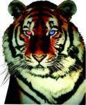 Black Tiger%s's Photo